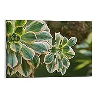 自然植物ポスター多肉植物の咲く3キャンバスアートポスターとウォールアート写真プリント家族の寝室の研究室の装飾ポスター16×24インチ(40×60cm)