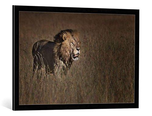 kunst für alle Bild mit Bilder-Rahmen: Phillip Chang Lion King - dekorativer Kunstdruck, hochwertig gerahmt, 90x60 cm, Schwarz/Kante grau
