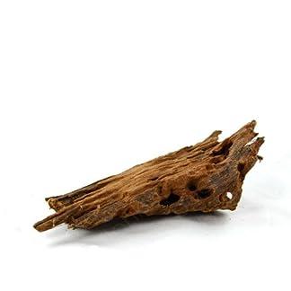 Mangrovenwurzel für Aquarien und Terrarien 12-15 cm Wurzel Mangroven