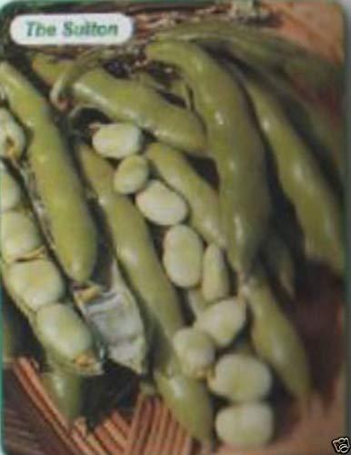 Portal Cool Winter/Frühjahr Saubohnen The Sutton 60 Seed £ 2, Gemüse, Freepost