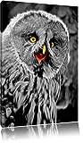 prächtiger Habichtskauz schwarz/weiß Deluxe Format: 80x60