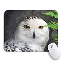 Mabby マウスマット - 240 x 200mm,Green Snowy of Great Snow Owl Bird Animal Beak,for Office and Gaming,Computer Mousepad Non-Slip Rubber Base