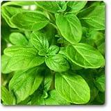 maggiorana - herb semi, 100 semi/pack