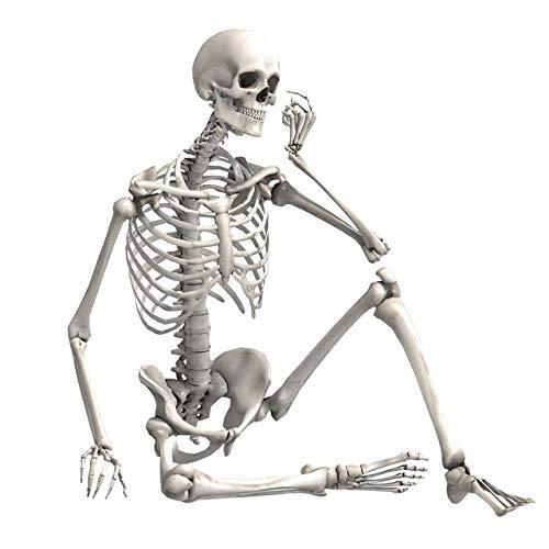 SimulacióN Duradera Esqueleto Humano DecoracióN Fiesta De Halloween Bar Accesorios De Casa Embrujada DecoracióN del Hogar