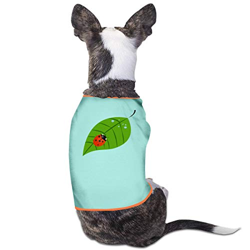 Jiaojiaozhe Ladybug On A Leaf Pet Service Pet Clothing Funny Dog Cat Kostuum Black, M, Blauw