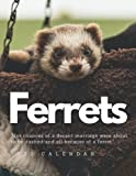 Ferrets Calendar 2022: Fantastic Calendar 2022 with 8.5   x 11   for You! Big grid for Note, Scheduling, Planning