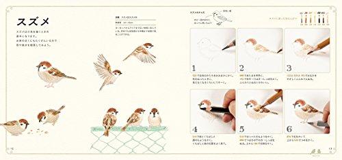 立体造形家、イラストレーターとして活躍中の秋草愛さんの色鉛筆で描くシリーズの1冊。カワセミなどの野鳥から、フラミンゴやハシビロコウなど、動物園で会える人気の鳥まで、130種類以上の鳥が登場します。