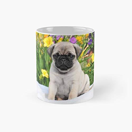 Aireal Apparel - Taza clásica con diseño de cachorro Caesar The Pug de Aireal Apparel | El mejor regalo de tazas de café divertidas, 11 oz