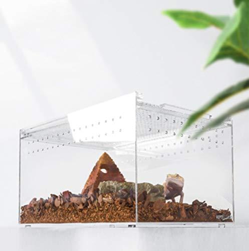 Terrario reptil Kit de alimentación de anfibios tanque de venlitación transparente caja de acrílico lagarto dragón barbudo serpiente gecko erizo animales pequeños jaula de cría