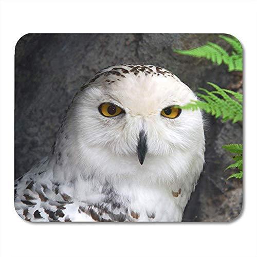 Muismat groen besneeuwd van grote sneeuw uil vogel dier snavel Decor Rubber Backing Mousepad Office Nonslip Mouse Mat 25X30Cm Gaming Mouse Pad