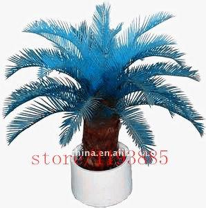 der angehende Rate 97% seltene Topfpflanze für zu Hause Garten 100pcs / bag blau Cycas Samen, Sago Palme seeds.bonsai Blumensamen,