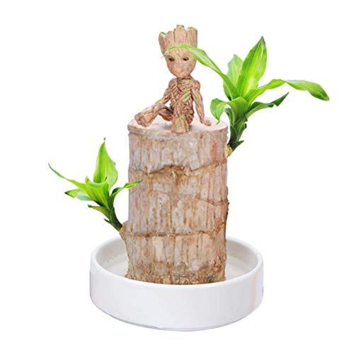 ykop Mini planta, Mini Brasil Lucky Badan Wood Hydroponic Maceta Plantas Stumf...