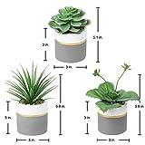 Zoom IMG-1 set di 3 piante grasse