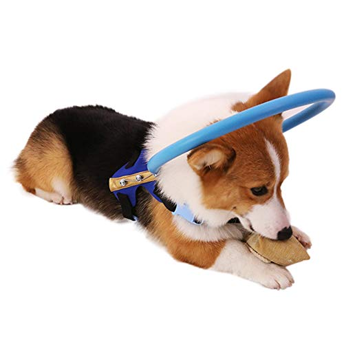 XIYAO Halo-Hundegeschirr für Blinde Hunde Kunststoff-Schutzwesten-Ring für Hunde mit kranken Augen verhindern Kollision - idealer blinder Hundezubehör zur Navigation in der Umgebung