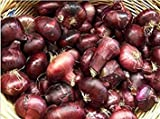 HANO Seeds Package: Fresh Non GMO Itian CIPOLLINI Onion - 200 Seeds - Sweet - 2+ Months Storage