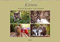 Kittens - Britisch Kurzhaar Katzenkinder (Wandkalender 2022 DIN A2 quer): Mit kleinen Stubentigern durch das Jahr (Monatskalender, 14 Seiten )