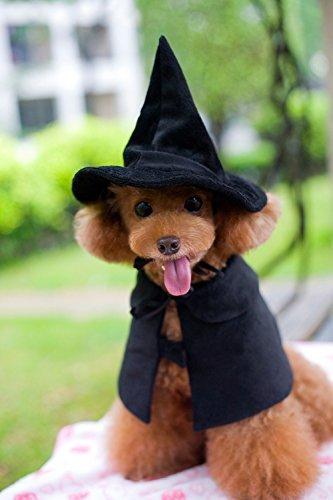 Lanyar Carino con cappuccio mantello strega/Wizard costume per cani e gatti gattino, costume da gatto domestico Cosutmes, Medium, Cruz V2 Fresh Foam