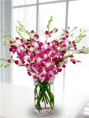 Premium Cut Purple Orchids (20 stems with Vase)