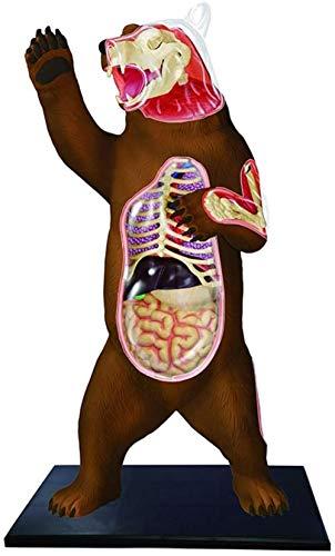 hsj 4D Vision Tier Organ Anatomie Modell-Puppe, Tierdekoration, Tier Simulation Model Exquisite Verarbeitung (Color : Brown Bear)