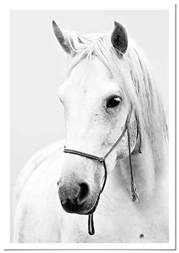 Panorama Poster met Passepartout Paard 50x70cm - Gedrukt op hoogwaardig Papier van 250gr - Dieren Poster - Decoratieve Dieren Foto's - Moderne Woonkamer Schilderijen - Slaapkamer Decoratie Foto's