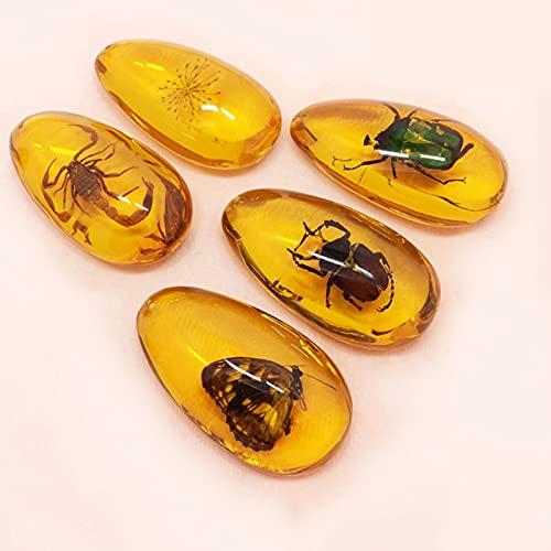 LYR Los especímenes de Resina de Insectos, Gotas de Agua Grandes, ámbar de Insectos Fluorescentes, diseño de perforación, se Pueden Usar para Hacer Colgantes (5pcs)