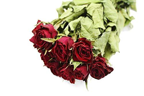 Dutch Masters in Dried Flowers Getrocknete Rosen/Trockenblumenstrauß Bordeauxrot | 10 Natürliche Trockenrosen einfarbig | Potpourri | Dekoblumen Strauß | 40 cm