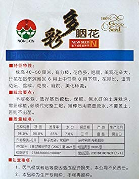 FERRY Hohe Wachstum Seeds Nicht NUR Pflanzen: Seeds CUSHY-100 PC/Beutel Regenbogen-Rouge-Blumensamen, Original-Pack-Rare Big Garden Bonsai Blumensamen H 40-50 cm Lange Blütezeit