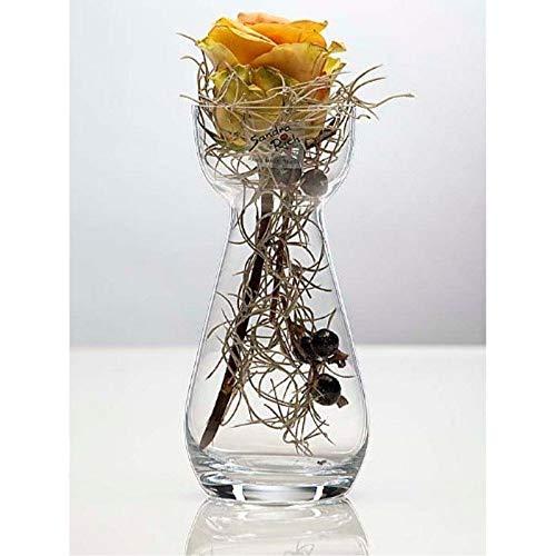 Glasvase HYACINTH Hyazinthenglas Vase Glas Blumenvase Tischvase, 17 cm