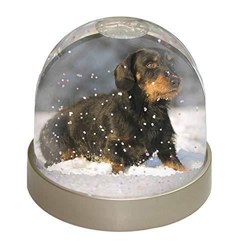 Advanta langhaarige Dackel Hund Schneekugel Snow Dome Geschenk, Mehrfarbig, 9,2x 9,2x 8cm