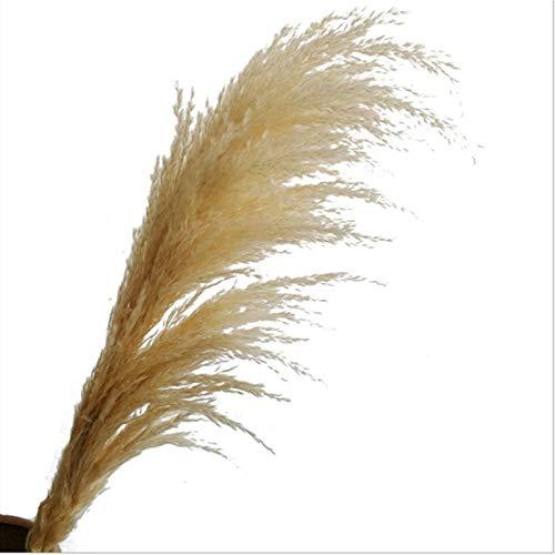 QKFON Ramo de flores secas naturales, ramo de pampas con sequedad, ramo, pampas, pasto, tallo mullido, color natural, relleno de jarrón para decoración de fiesta en el hogar