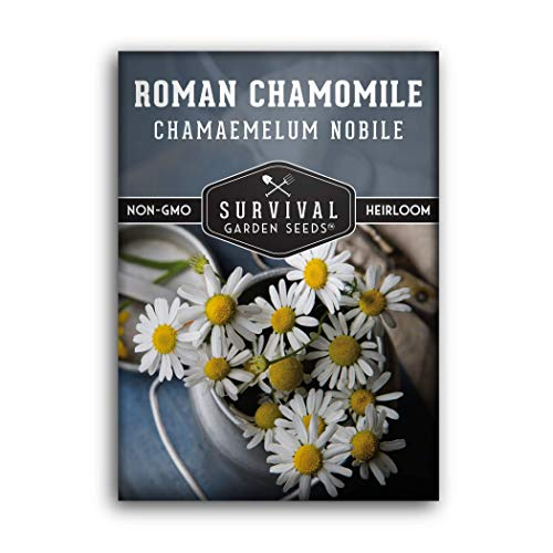 Survival Garden Seeds - Roman Chamomile Seed for Planting - Packet with...