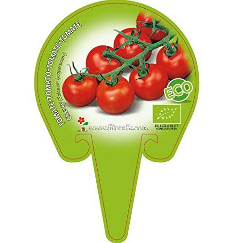 Plantón ecológico de Tomate Cherry Redondo pack 6 ud. 54x4