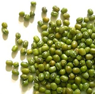 Sprouting Seeds Mung Bean 1 Pound - Todd`s Seeds