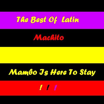 Mambo Is Here To Stay