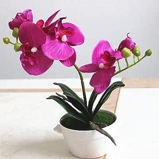 Best decorative flower pots online india Reviews