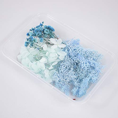 1 Box Real Dried Flower Dry Plants For Aromatherapy Candle Epoxy Resin Pendant Necklace Jewelry Making Craft DIY Accessories - NO.38