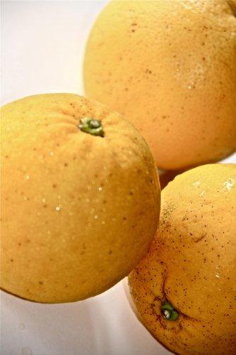 減農薬晩柑ジューシーオレンジ約5kg贈答用熊本産産地直送