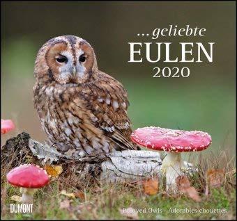 Geliebte Eulen - Kalender 2020 - DuMont-Verlag - Wandkalender mit Zauberhaften Aufnahmen - 38 cm x 35,5 cm