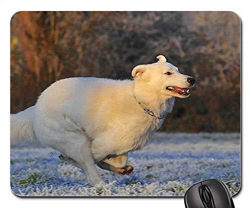 Yanteng Alfombrillas para ratón - Perro Pastor Suizo, Raza de Perro, Helada, frío, Invierno