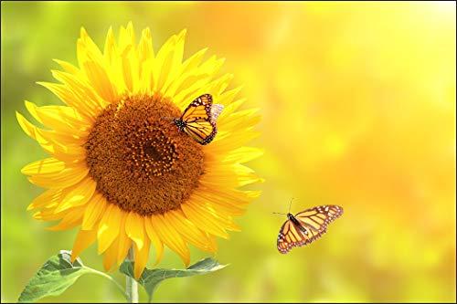 Muralo Fototapete Blumen 240 x 360 cm Vlies Tapete Wandtapeten Sonnenblume Schmetterlinge Natur Wohnzimmer Schlafzimmer Moderne Wandbilder XXL Pflanzen Natur Wand Dekoration