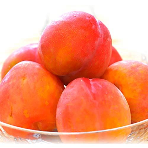 国華園 青森産 プラム 4�s 1組 すもも 李 フルーツ 食品