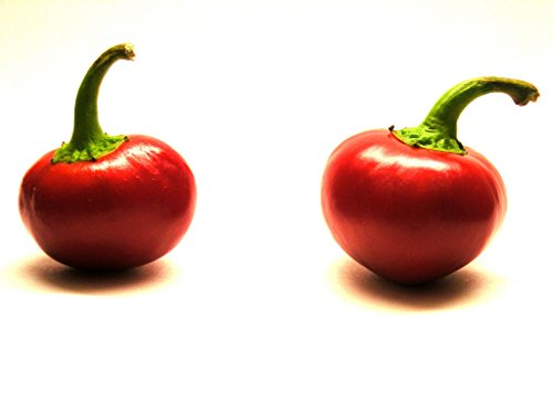 Chocolat Bhutlah brun foncé Hot Chili Pepper Seeds 10 PCS WORLD'S HOTTEST
