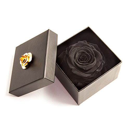 ROSEMARIE SCHULZ Heidelberg Infinity Rose haltbar 3 Jahre in Rosenbox konserviert (Schwarz, 1 Rose)