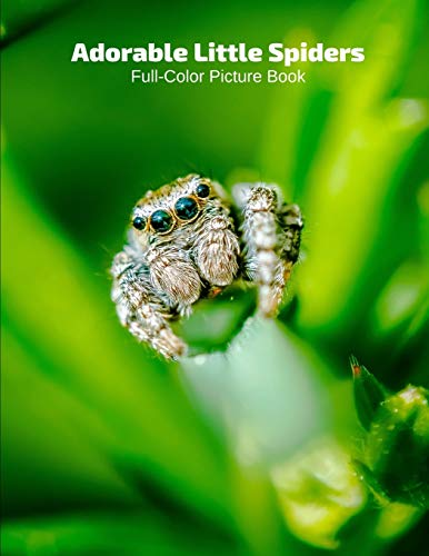 Adorable Little Spiders Full-Color Picture Book: Insects Photography Book