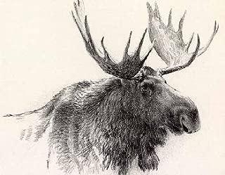 Robert Bateman - Bull Moose Stone Lithograph