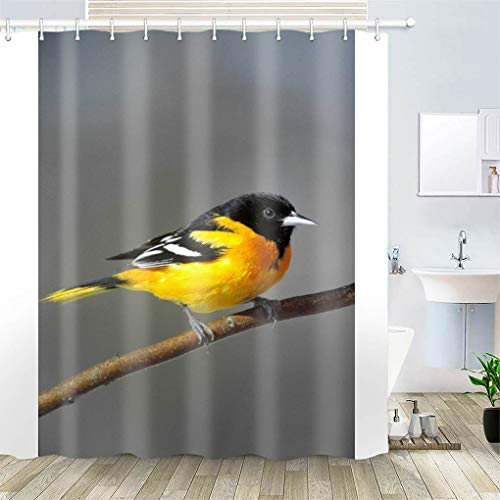 Shower Curtain, Polyester Fabric Waterproof Hooks Included-72x72 inches- Baltimore Oriole Bird Perched Branch Wildlife