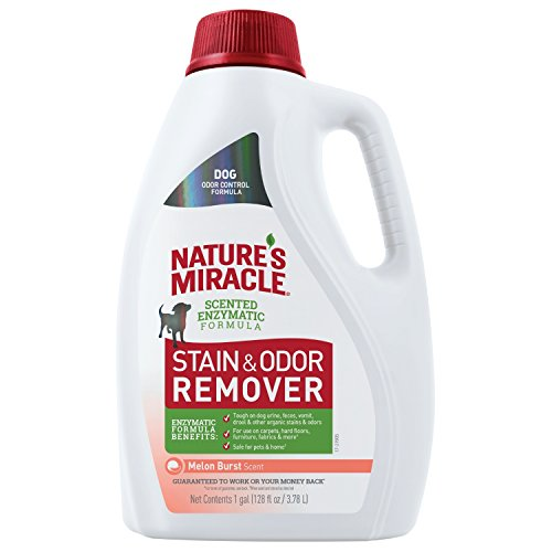 Nature's Miracle P-98153 Dog Stain and Odor Remover, 128 fl oz, Melon Burst Scent, Enzymatic Formula for Urine Stains, Feces Stains, Vomit Stains and Drool Stains, Odor Control