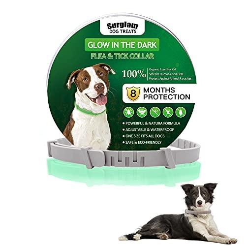 Collare Antipulci e Zecche per Cani, Collare Regolabile Impermeabile, 8 Mesi di Protezione, Si Illumina al Buio, Soluzione Naturale Contro i parassiti per Cane