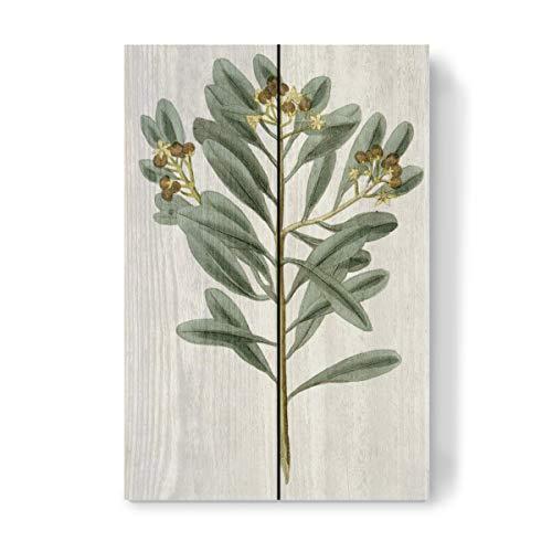 artboxONE Holzbild 30x20 cm Natur Zimtpflanze von Künstler Culture Images