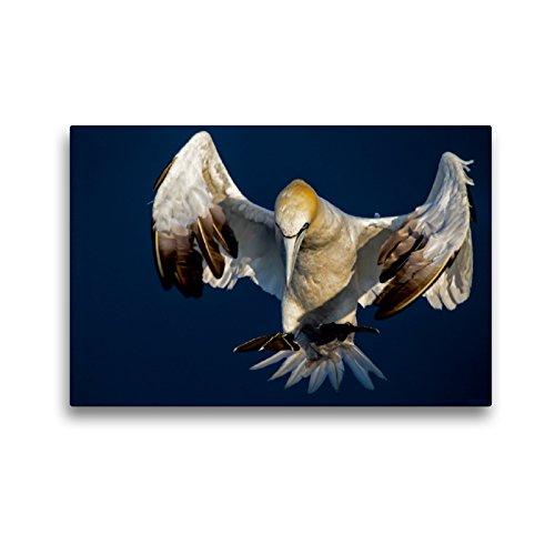 CALVENDO Premium Textil-Leinwand 45 x 30 cm Quer-Format Landeanflug, Leinwanddruck von Leon Uppena
